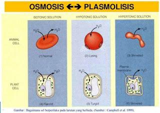 perbedaan difusi dan osmosis beserta contohnya,perbedaan difusi dan osmosis dalam bentuk tabel,contoh difusi dan osmosis,tabel perbedaan difusi dan osmosis,