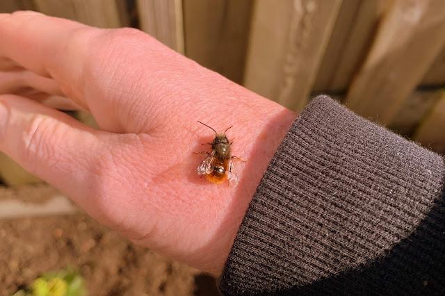 Knuffelbijen