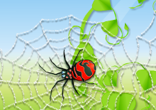 مهارة العنكبوت