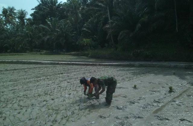 Banbisa ini Terjun Langsung ke Sawah Menanam Padi Bersama Petani di Desa Durian