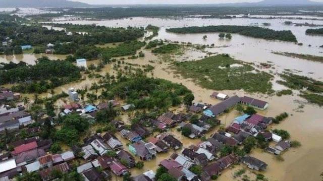 Istana Klaim tak Obral Izin Alih Hutan, Jatam: Ada 592 Unit IPPKH di Era Jokowi