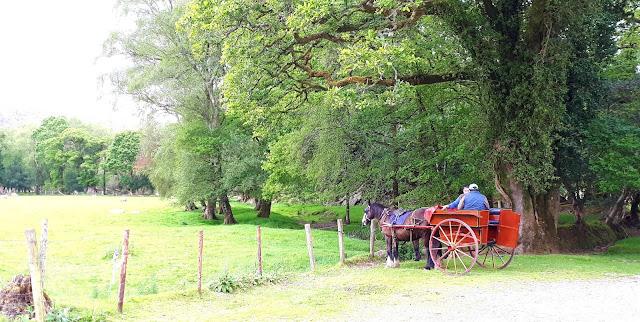 Vaeltaminen irlannissa, vaeltaminen, irlanti, killarney, cap of dunloe, vuoristo, hevonen, hevoskärryt