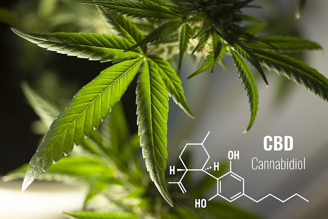 4 Qualities to Consider When Looking for a Premium CBD Flower