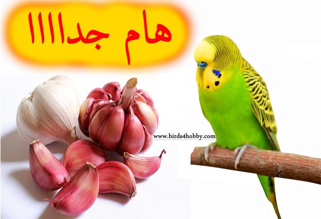 الثوم وفوائده الصحية للطيور وكيفية تقديمه