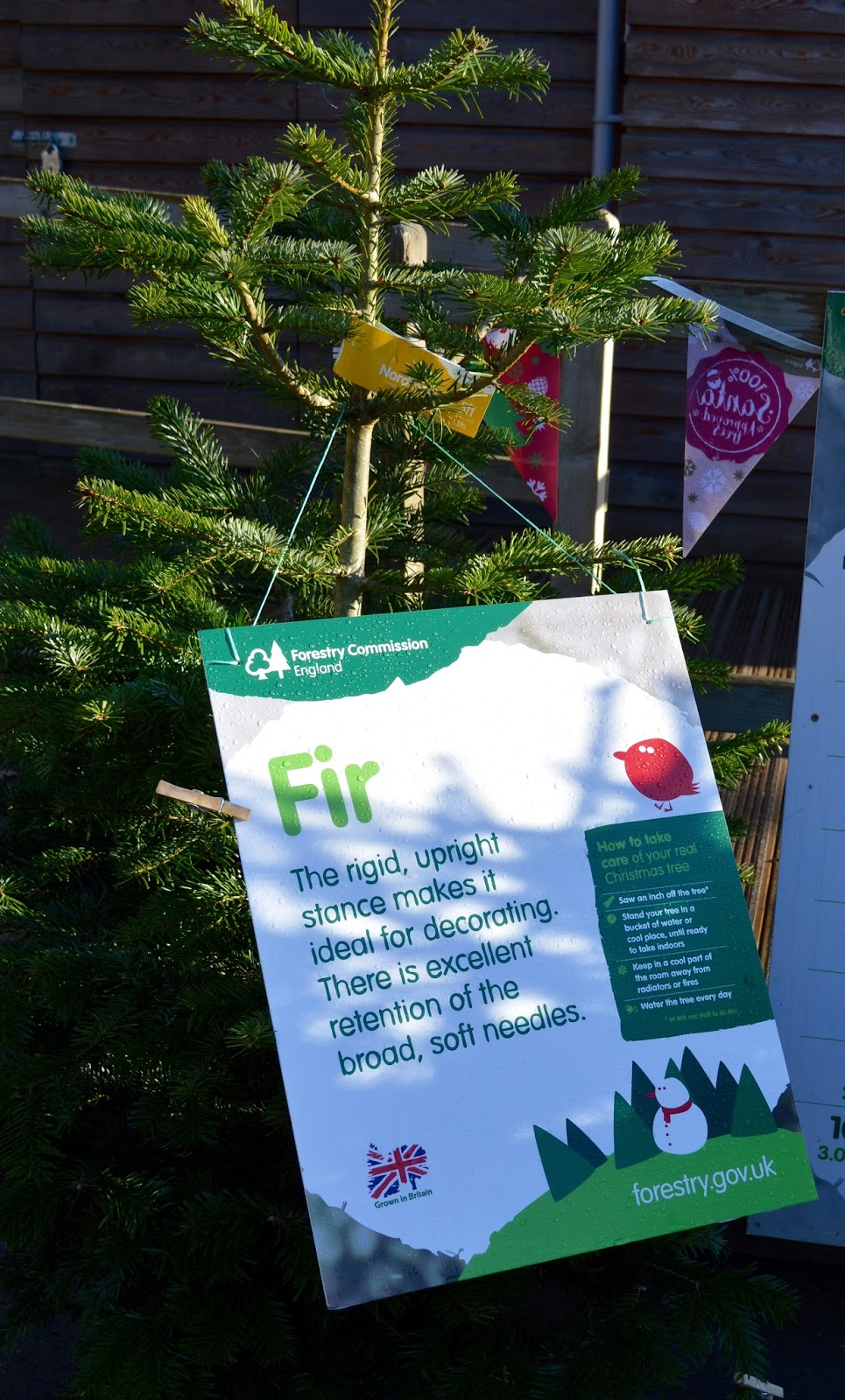 Why you should choose a real, sustainable Christmas tree from a Forestry Commission Forest (Hamsterley Forest in Durham and Kielder Forest in Northumberland) -  - fir tree properties