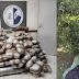Θεσπρωτία: Είχε κρύψει στις μανταρινιές 167,5 κιλά κάνναβης