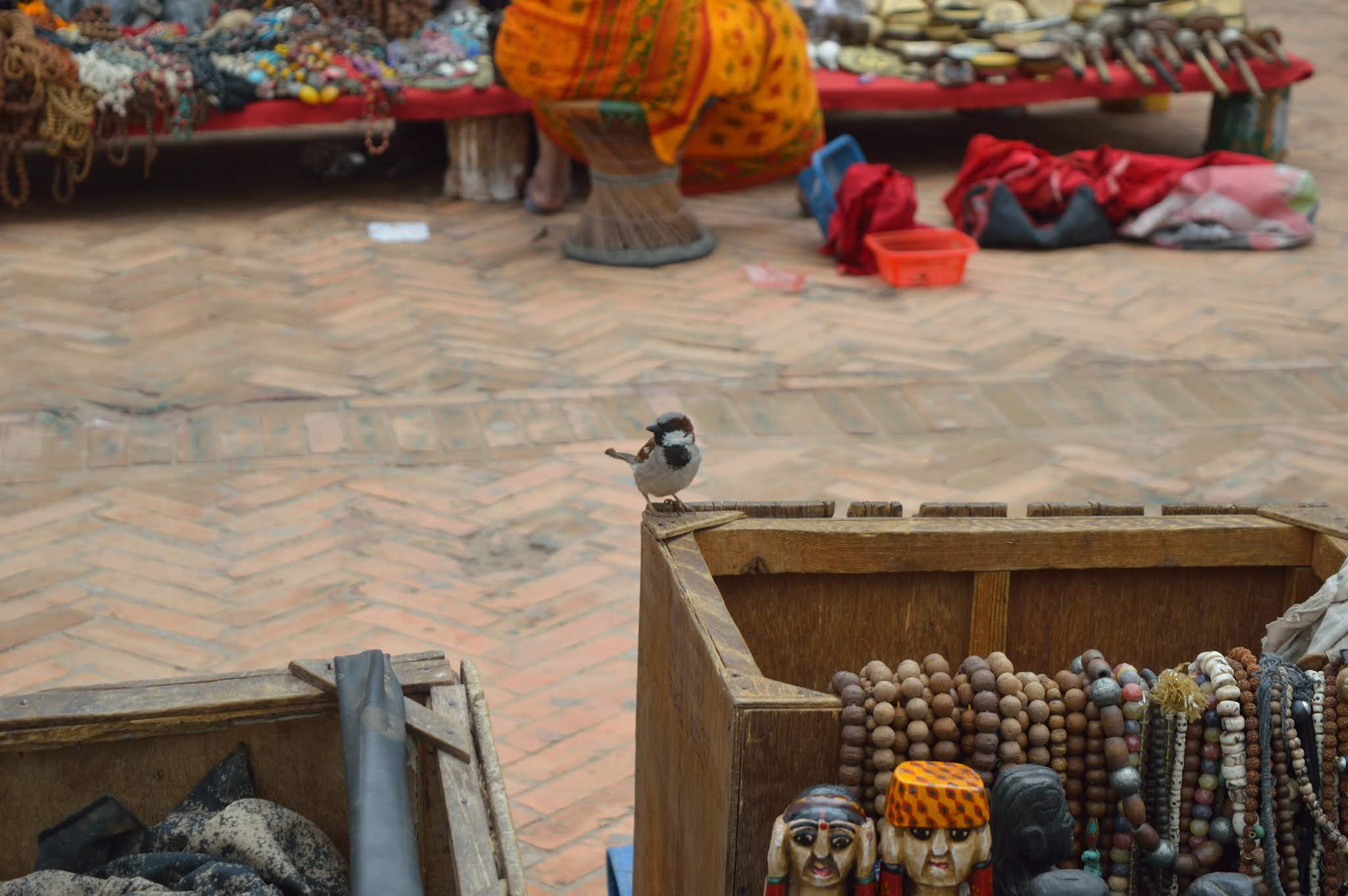 nepal, shiv sangal, scenic beauty, sparrow