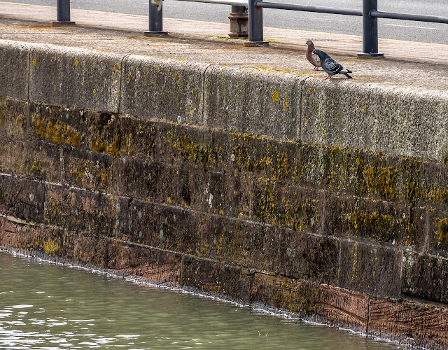 Photo of the pigeons wondering where the hole has gone at high tide