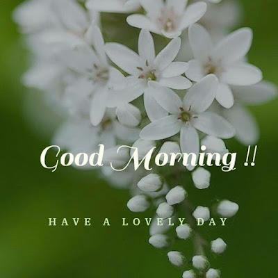 60+ Good Morning  Images Quotes | 115 सुप्रभात सुविचार संदेश ज्ञान