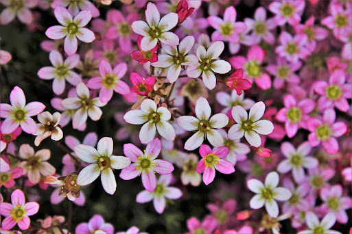 صور زهور ورق حائط 5