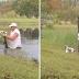 Homem pula em lago nos EUA e salva cachorro de jacaré