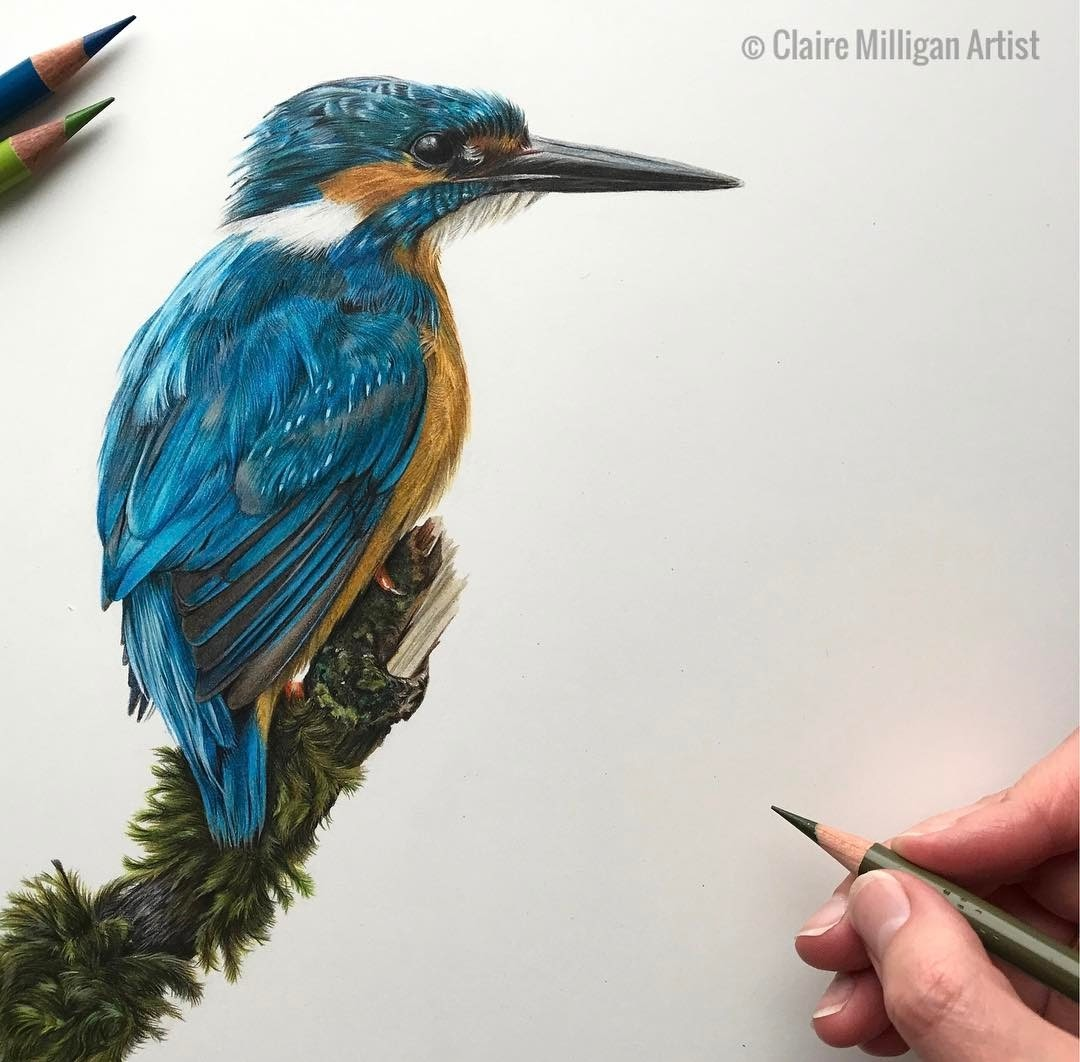 07-Kingfisher-Little-Blue-Claire-Milligan-Cats-birds-and-Dogs-Realistic-Animal-Drawings-www-designstack-co
