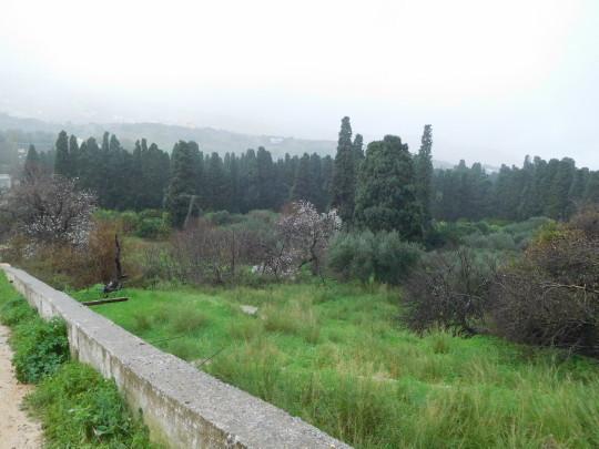 Κρύο, βροχές και ανθισμένες αμυγδαλιές