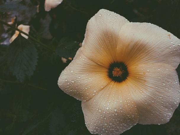 Inverno, flores, gotas, detalhes