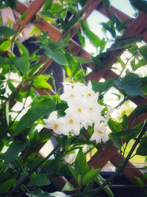 najpiękniejsze kwiaty na balkon