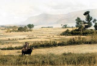 seorang anak kerbau dan padang rumput di pangururan