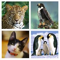 https://play.google.com/store/apps/details?id=com.hellosofts.animalsound