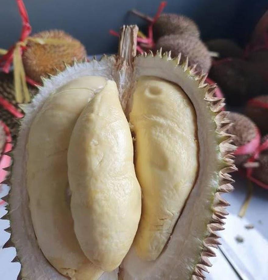 Bibit durian matahari 80 cm Pekalongan