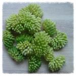 http://www.foamiran.pl/pl/p/srodki-do-kwiatow-mini-matowe-cieniowane-/803