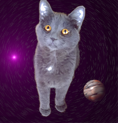 Kitten on a whirl of stars