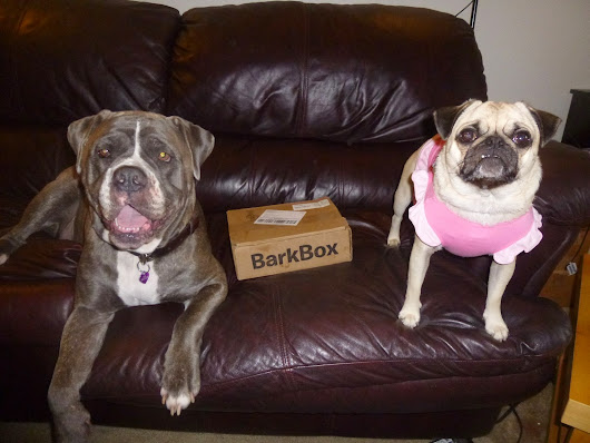 Our March Barkbox Review