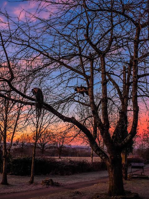 Pauwen in de boom