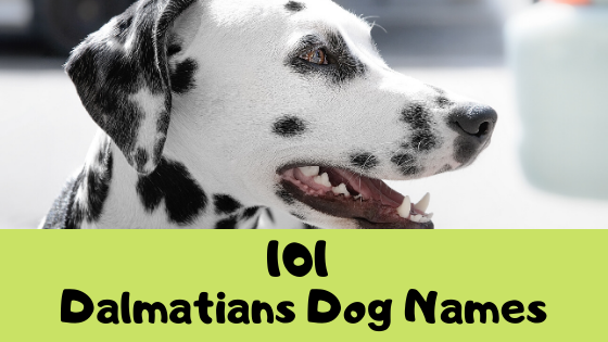 [Best] 101 Dalmatians Dog Names
