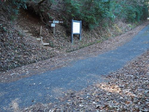 登山コースは林道を横切っている