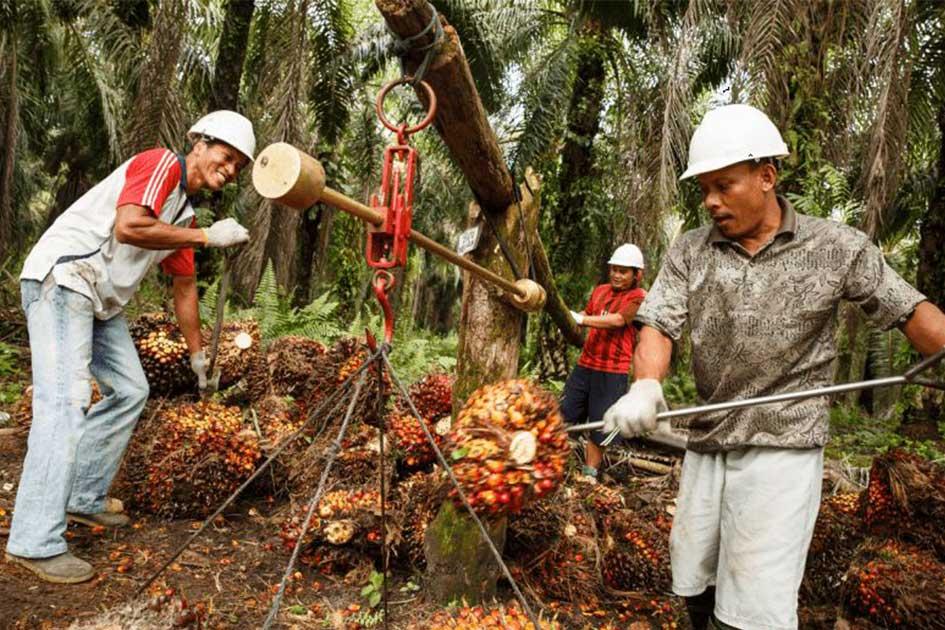 Loker Kebun Sawit - PT Bumitama Gunajaya Agro