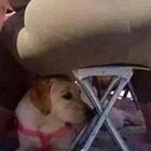 https://www.macacomagro.com/2019/11/a-fe-de-um-cachorro.html