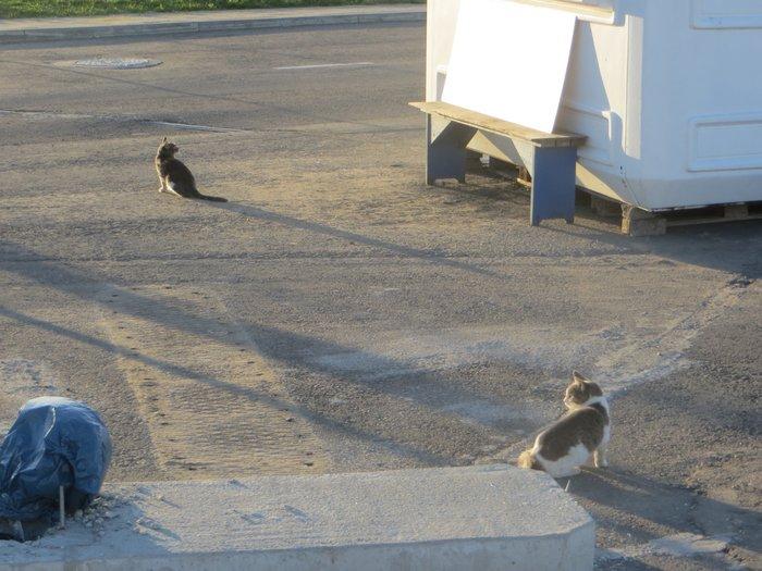 Сидят на солнце кошки