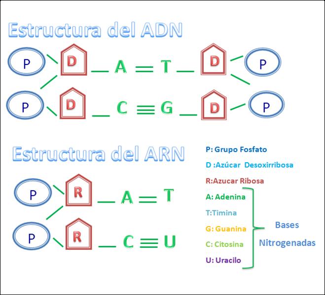 Multiblogeducativo Bases Moleculares