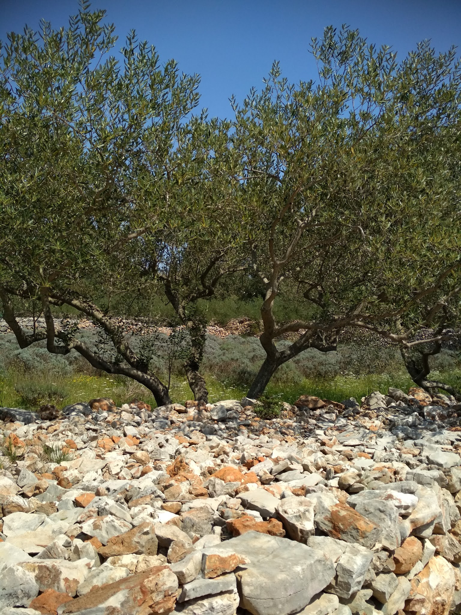 #MODAODARADOSTI VISIT STARI GRAD PLAIN, A FULLY PRESERVED ANCIENT GREEK AGRICULTURAL AREA