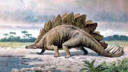 كل شئ عن ديناصور ستيجوسوروس