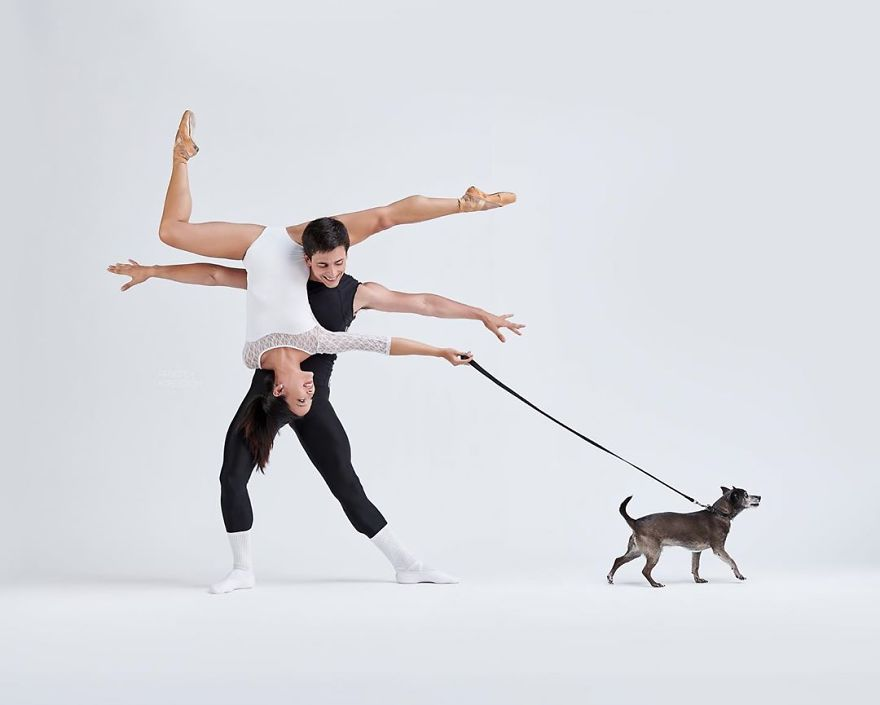 Ballet Dancers And Dogs Posed Together