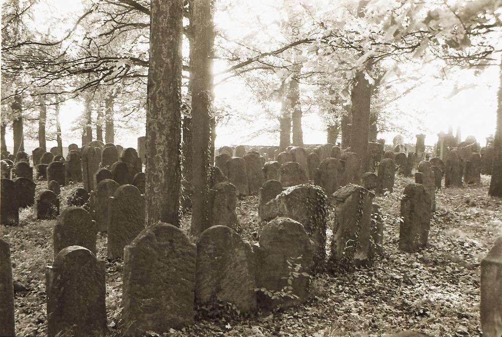 Gräber unter alten Bäumen auf einem jüdischen Friedhof