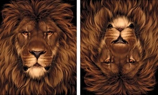 Düzken aslan tersken fare olan resim