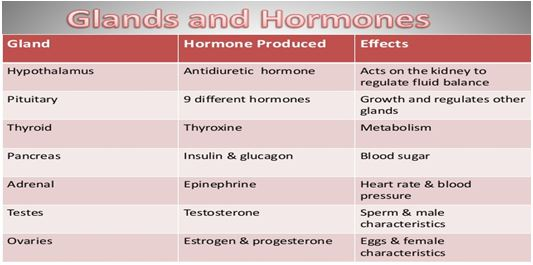 Various Glands and Hormones2 - मानव शरीर में विभिन्न ग्रंथियां और हार्मोन्स