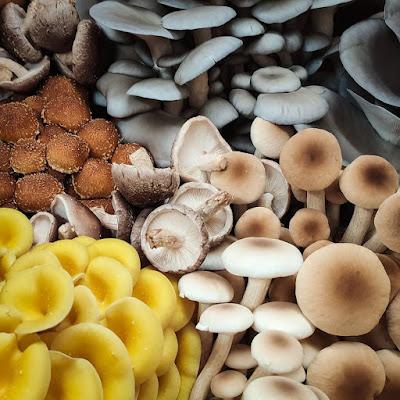 Oyster mushroom in Hyderabad
