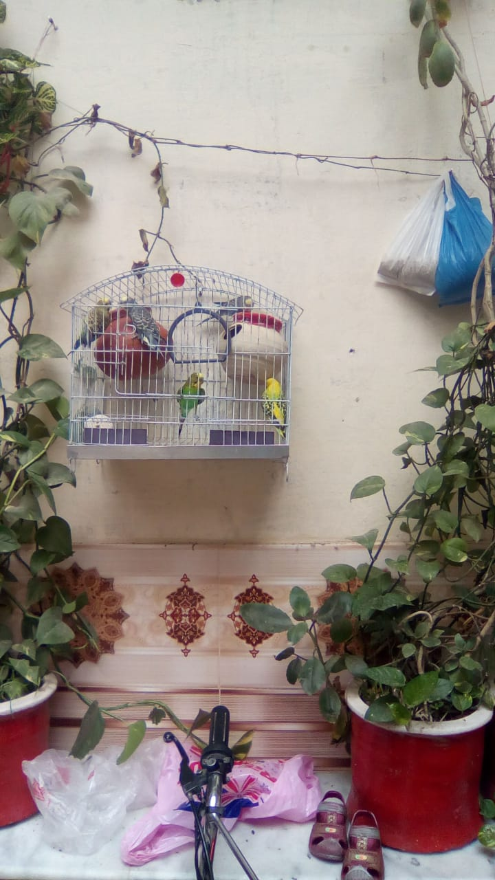 Birds for Sale in Haripur