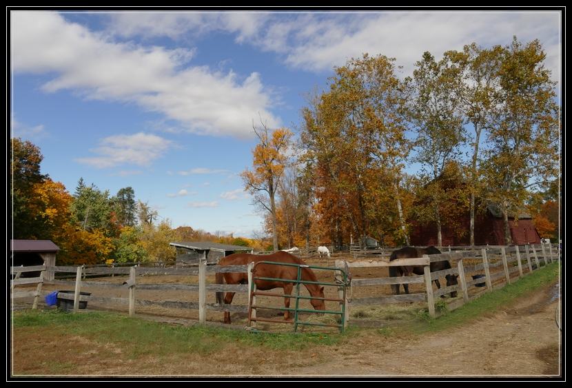 Equine rescue at Little Brook Farm