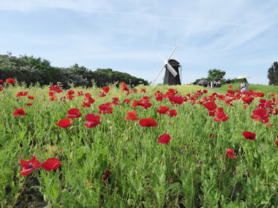 花博記念公園鶴見緑地 風車の丘 ポピーの花