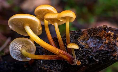 20 Ciri-Ciri Jamur (Fungi), Penjelasan dan Contohnya