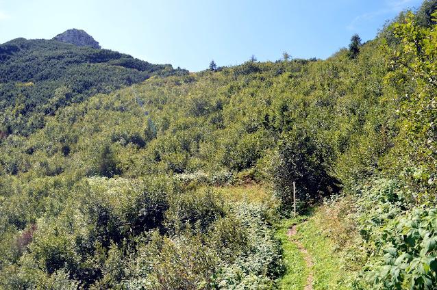 monte zoncolan estate anello tamai