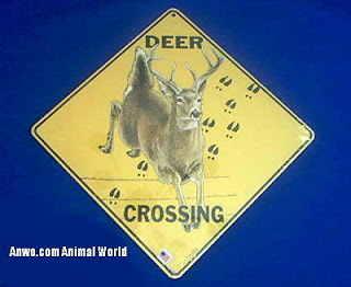 buck deer crossing sign