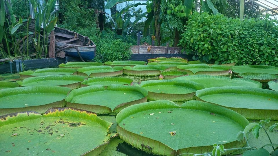 Inside the Tropical House in Ventnor's Botanical Garden