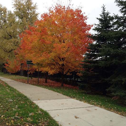 Beautiful Fall Sights, Sounds, and Great Food | East Meets West Veg