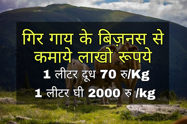 Gir Cow Business In Hindi