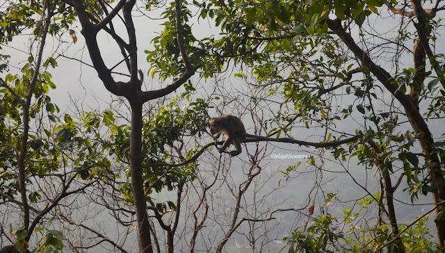 Monyet liar Puncak Gunung Lembu 792 mdpl | JelajahSuwanto