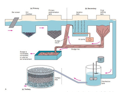 Municipal wastewater treatment processes